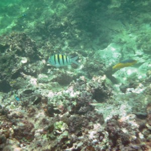 2011_03_07_Barbados_Cat_Turtle_Cruise_Reef_2