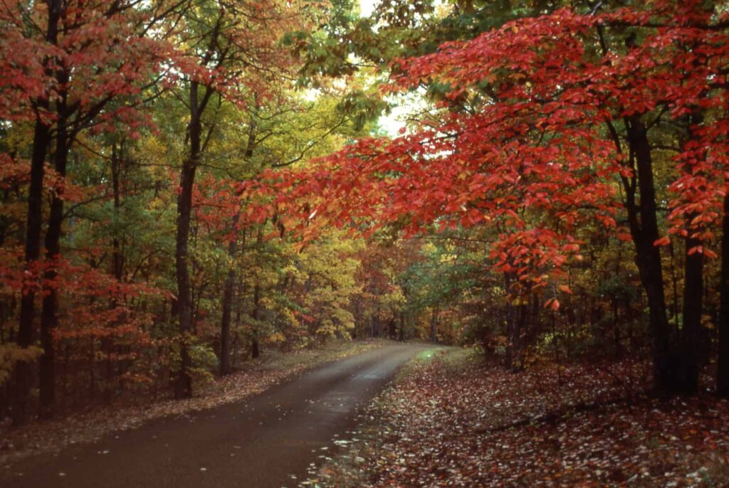 Fall Foliage Sailings Open Door To International Travel For Many | 25